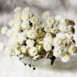Bouquet of chrysanthemums — Stockfoto