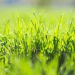 Green summer grass and sun — Stock Photo #26875715