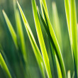 Fresh thick grass — Stock fotografie