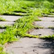 Stock Photo: Footpath on th green grass in park