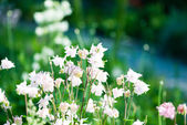 Beautiful light pink flowers — Stockfoto