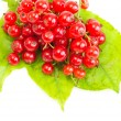 Red Currant on green leaves — Foto Stock