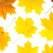 Collection beautiful colorful autumn leaves — Stock Photo
