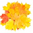 Stock Photo: Collection beautiful colorful autumn leaves