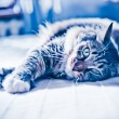 Cat lying on bed — Foto de Stock