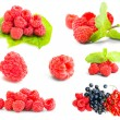 Collection of ripe red raspberries — Stock Photo #34306721