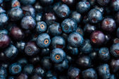 Blueberries as background — Stock Photo