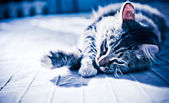 Cat lying on bed — Stock Photo
