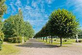 Alej v parku kuskovo — Stock fotografie