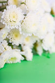 White chrysanthemums — Foto Stock