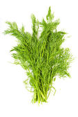 Bunch fresh dill herb — Stock Photo