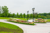 Green city park in sunny summer day  — Stock Photo