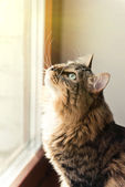 Cat looking out of window — Stock Photo