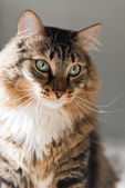 Beautiful cat — Stock Photo