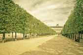 "Sculpted trees alley in the garden of ""Palais Royal"" in Paris  — Stock Photo"
