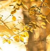 Sarı yapraklar — Stok fotoğraf