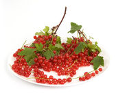 Red currant. — Photo