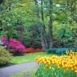 Famous Keukenhof garden - Stock Photo