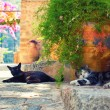 Cats in Deia village — Stock Photo #31038771