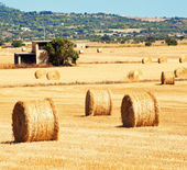 Landscape with straw bales — Stock Photo