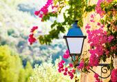街头灯笼花 — 图库照片