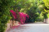 Callejón flor hermosa — Foto de Stock