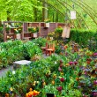 Stock Photo: Beautiful Keukenhof spring garden