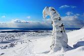 Paysage d'hiver avec sapin recouvert de neige au premier plan — Photo
