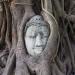 Buddhas head in banyan tree roots, Ayutthaya, Thailand - Stock Photo