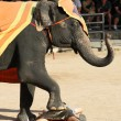 Elephant show, Thailand - Stock Photo