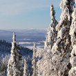 Winter forest landscape, Kola Peninsula, Russia — Stock Photo