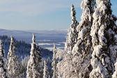 Zimní lesní krajinu, poloostrov kola, rusko — Stock fotografie