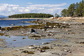 The White Sea coast at low tide, Kola Peninsula, Russia — Stock Photo