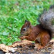 Squirrel sitting on a tree stump — Foto Stock