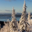 Stock Photo: Winter forest landscape, Kola Peninsula, Russia