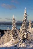 Inverno floresta paisagem, península de kola, rússia — Foto Stock