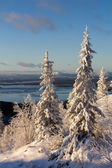 Winter forest landscape, Kola Peninsula, Russia — Foto Stock