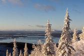 Invierno bosque paisaje, península de kola, rusia — Foto de Stock
