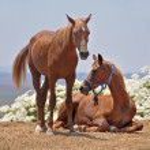 Horses — Stock Photo #3558683