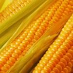 Corn — Stock Photo #1216129