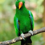 Parrot bird — Stock Photo #14106246