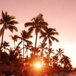 Caribbean sunset — Stock Photo #1538971