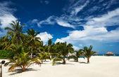 Beautiful beach at Maldives — Stock Photo