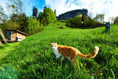 Cat walks in the meadow — Stock Photo