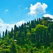 Cypress hill near Portofino village — Stock Photo