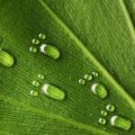 Water footprints on leaf — Stock Photo #3380486