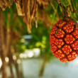 Screw Pine fruit or Pandanus — Stock Photo #40798525