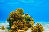 Coral reef at Maldives — Stock Photo