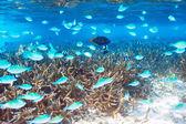 Coral reef at Maldives — Foto de Stock