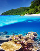 Beach with coral reef underwater view — Stock Photo